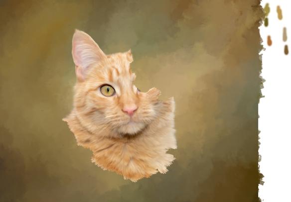 sample orange cat